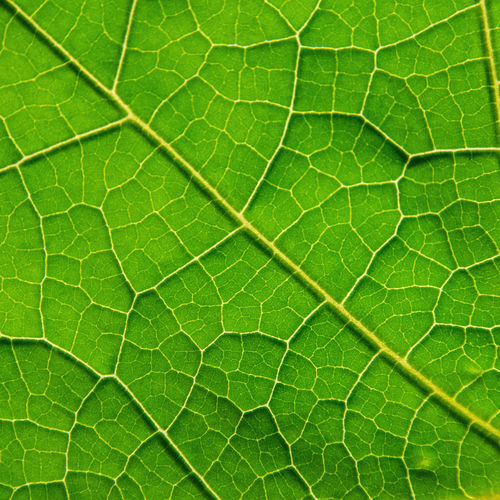 Macro of green leaves texture and structure of leaf fiber, Background pattern by detail of green leaf. Bright Green Leafs Natural Nature Plant Plants Textured  Abstract Backgrounds Biology Cell Detail Dots Ecology Fiber Fungus Greenery Leaf Leaves Macro Organic Pattern Texture Wallpaper