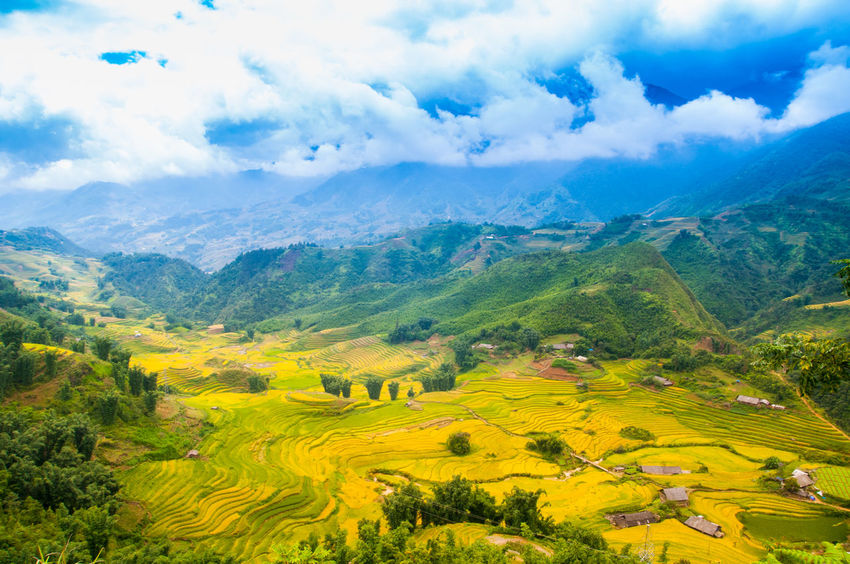 Vietnam Rice Fields Sapa Sapa, Vietnam Vietnam Agriculture Beauty In Nature Cloud - Sky Farm Field Growth High Angle View Idyllic Landscape Mountain Mountain Range Nature No People Outdoors Patchwork Landscape Rice Fields  Rice Fields And Water Rural Scene Scenics Sky Tranquil Scene Tranquility Tree