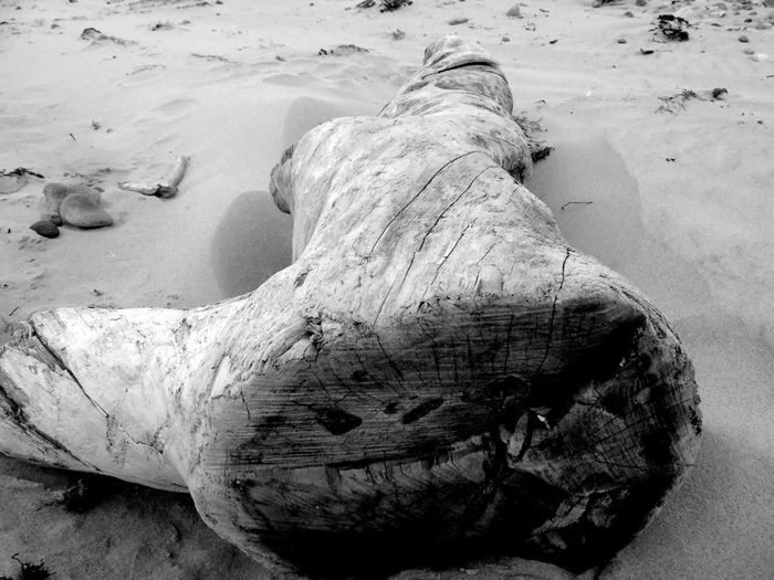 An elephant half buried in the sand 🐘 ... or maybe just more driftwood 🌴 Uk Scotland Eye Em Scotland Lossiemouth Lossiemouth West Beach Driftwood Wood Wooden Textured  Washed Up On Beach Beach Walks Walking Around Beach Sand Beauty In Nature Close-up Horizon Over Water EyeEm Beach Lovers Beaches Of Eyeem Backgrounds B/W Photography B/w Collection B/w Daily B/w Textured
