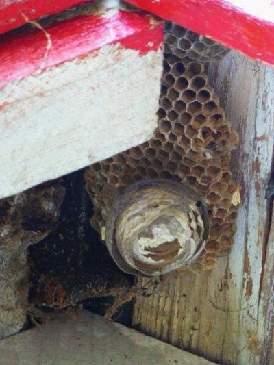 Wasp Wasp Nest SlateRun Pennsylvania Pinecreek Color Photography Nature Outdoors Summer2014