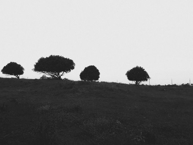 From a land that is far away Blackandwhite Black And White Photography Blackandwhite Photography Framing The View Landscape Landscape_photography Framing EyeEm Best Shots Eye4photography  EyeEm Gallery EyeEmBestPics EyeEm Best Edits EyeEm Selects Black Black & White Daylight Morning Philippines Tree Outdoors Silhouette Nature Day No People Growth Beauty In Nature Sky An Eye For Travel