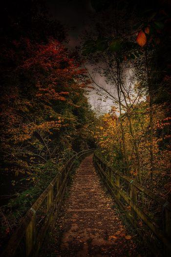 Skipton Leeds To Liverpool Canal Autumn Taking Photos Malephotographerofthemonth EyeEm Nature Lover Nature On Your Doorstep Autumn Colors TreePorn