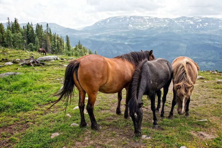 Animal Themes Beauty In Nature Cloud - Sky Day Domestic Animals Horse Landscape Mammal Mountain Mountain Range Nature No People Outdoors Pasture Scenics Sky Togetherness Travel Destinations