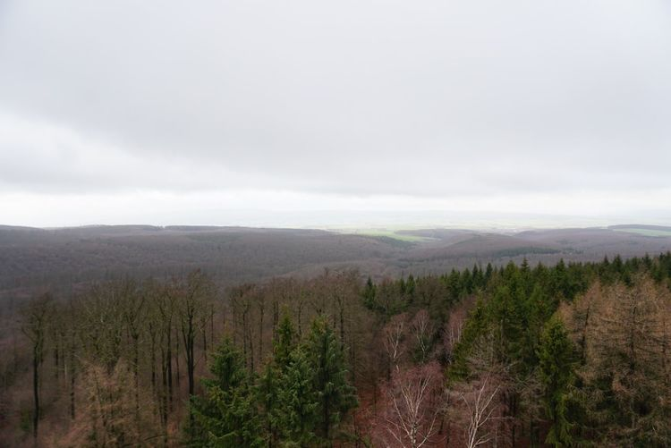 Forest Deister
