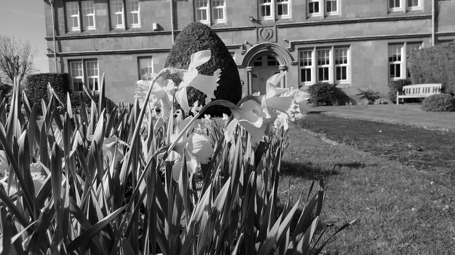 Building Exterior Architecture Growth Outdoors Nature No People Daffodils Black And White Spring Season