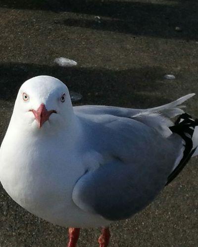 You looking at me!!!! Animal Wildlife Seagulls At The Lake