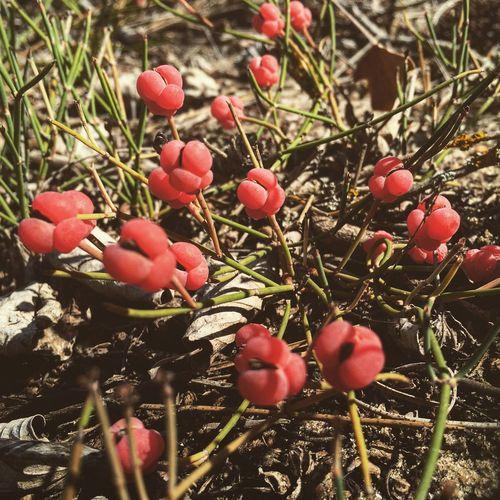 Travel Taking Photos Nature OpenEdit Vilkovo Red