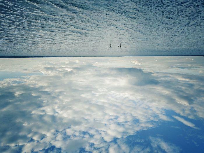 Bird Flying Water Sea Blue Sky Horizon Over Water Cloud - Sky