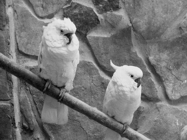 Animal Themes Bird Mammal One Animal Animal Wildlife Animals In The Wild No People EyeEmNewHere