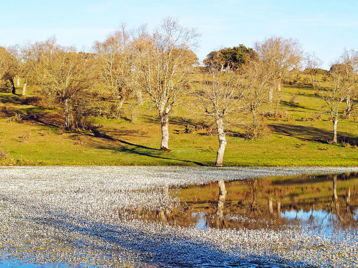 Beauty In Nature Day Environment Grassland Lake Landscape Landscape_Collection Meadow Nature Nature Nature_collection No People Outdoors Quercus Reflection River Scenics Sky Spring Tranquil Scene Tranquility Tree Water