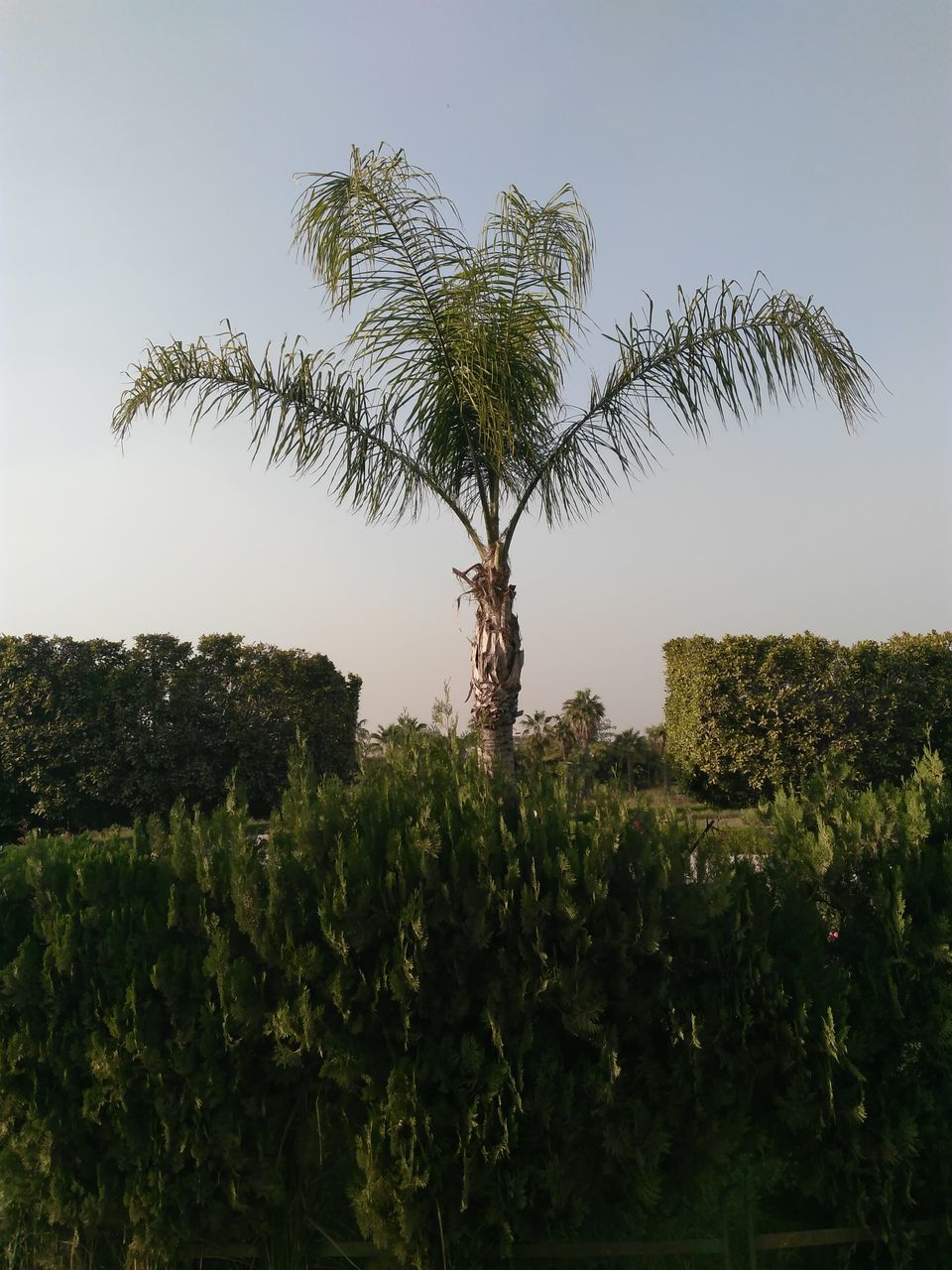 tree, growth, statue, plant, human representation, green color, day, no people, outdoors, sculpture, sky, nature, palm tree, clear sky, grass, beauty in nature