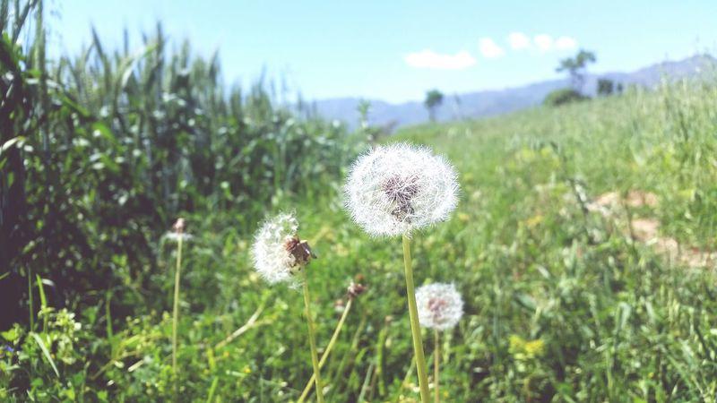 Plant Lilly World Beautiful Beautiful Nature Summer ☀ Beautiful Weather Sunny Greenry