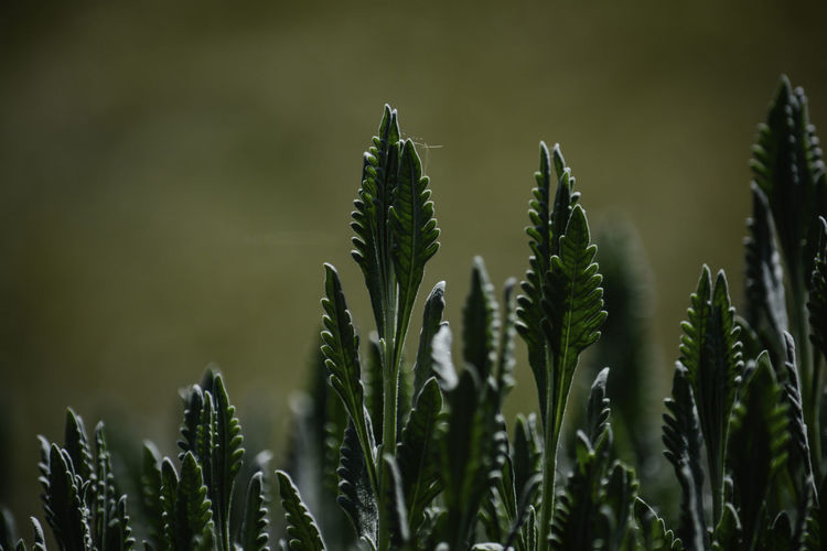 Close-up of fresh plants on field