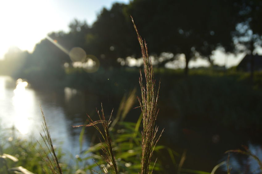 Plants along the water Beauty In Nature Day Focus On Foreground Growth Landscape Nature No People Outdoors Plant Reflection Sky Sunbeam Sunlight Twig Water Water Reflections Weather Perspectives On Nature Perspectives On Nature Food Stories