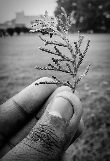 Human Hand Focus On Foreground Human Body Part Nature Close-up One Person Day Outdoors Beauty In Nature Sky Nature Nature Lover Beauty In Nature Hdrphotography Focused ❤ Focused Photo Black And White Collection Focused Light And Shadows Just Taking Pic Beauty In Ordinary Things