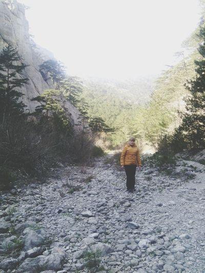 Yalta Krimea Forest