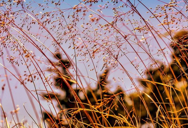 EyeEm Selects Nature Outdoors No People Growth Plant Beauty In Nature Day Water Sky Close-up Golden Light On The Beach Perspectives On Nature Walking Around