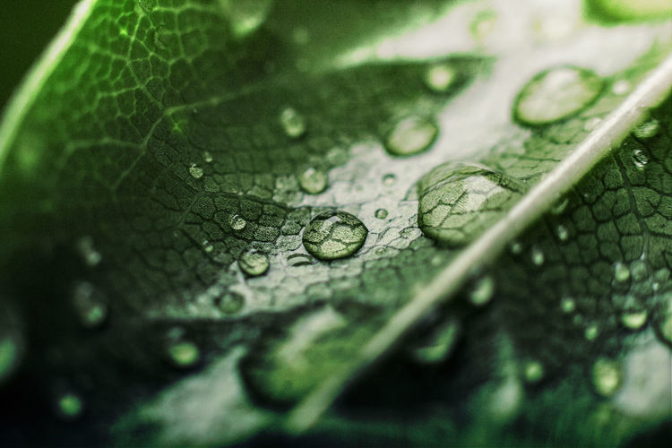 #Natural #Nature  #healthy Close-up Day Freshness Green Color Leaf Nature No People Selective Focus Water