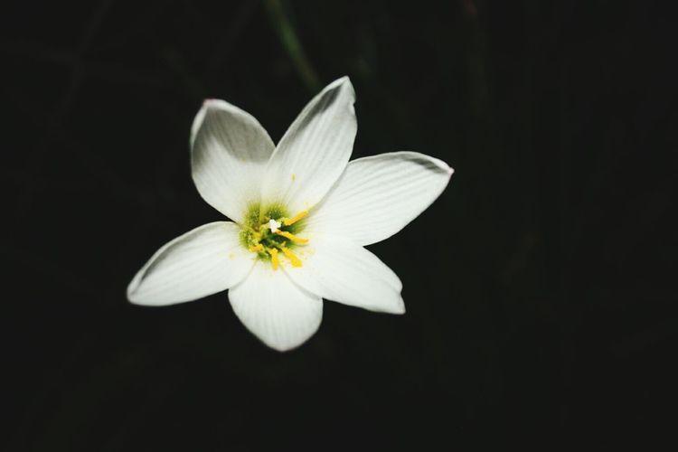 White Flower Flowers,Plants & Garden In My Garden