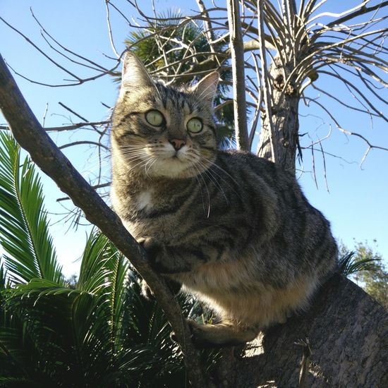 Amelie Kitty On A Tree Climbing Cat Big Green Eyes