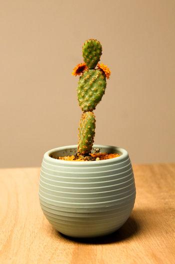 #cactus #cactus Flowers #green #orange Color #soil #table