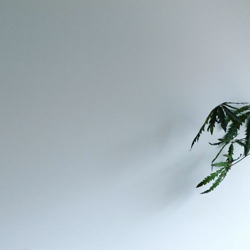 Low angle view of a plant against sky