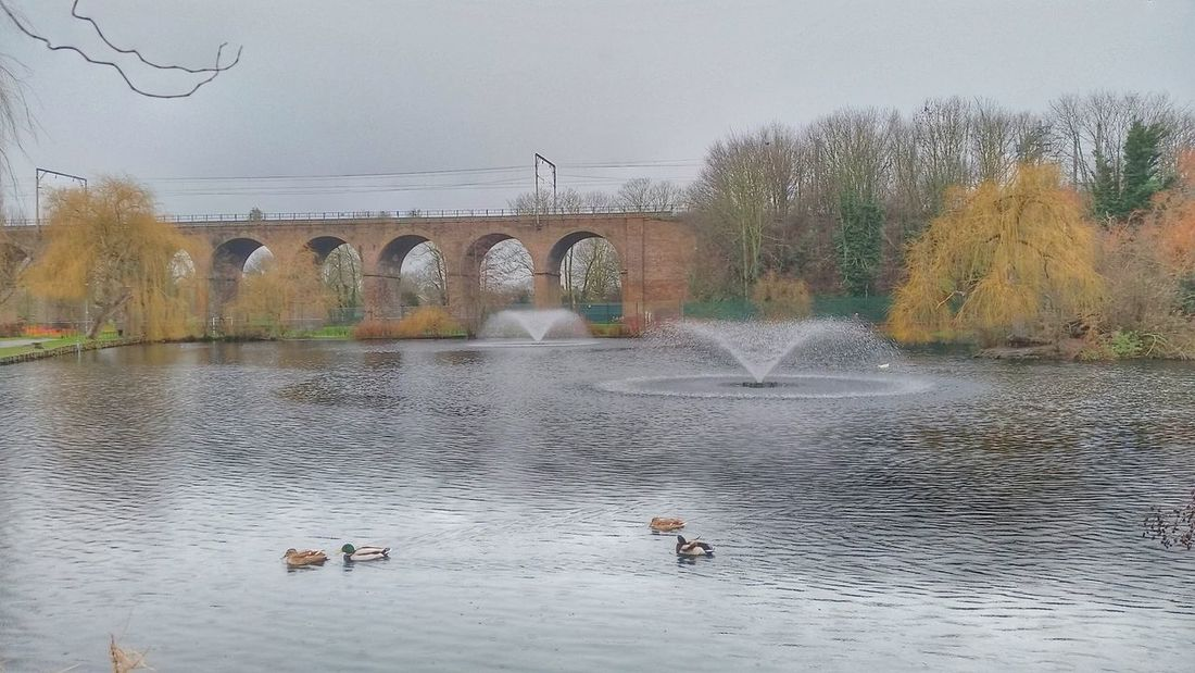 Railway Autumn Colours Autumn Colors Water Fountain Landscapes Water Feature Arches Arched At The Park Water Viaduct Ducks Chelmsford Urban Landscape