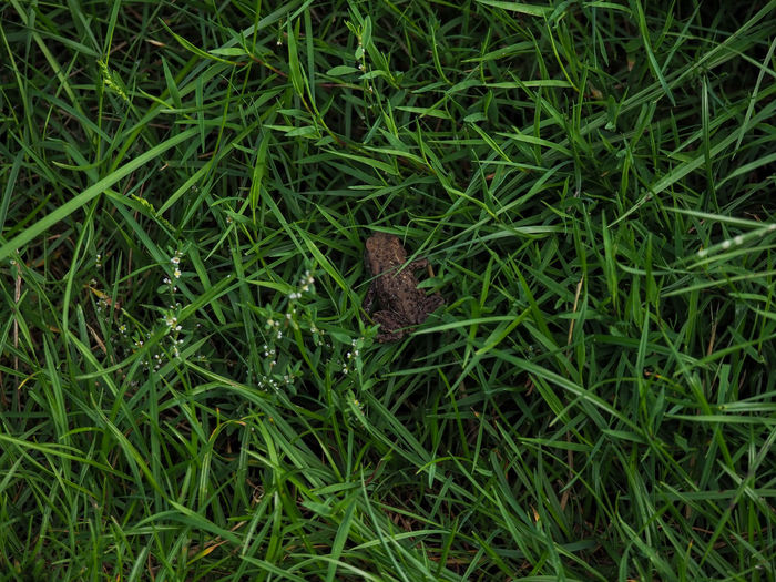 High angle view of butterfly on grassy field