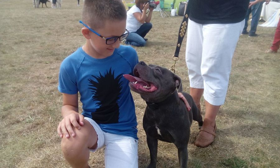 Boy and smilling Stafordshire bullterier Dog Smile Boy Boys Canine Child Day Dog Domestic Animals Friendship Outdoors People Pets Real People Smile Staford Stafordshire Bull Terrier Stb