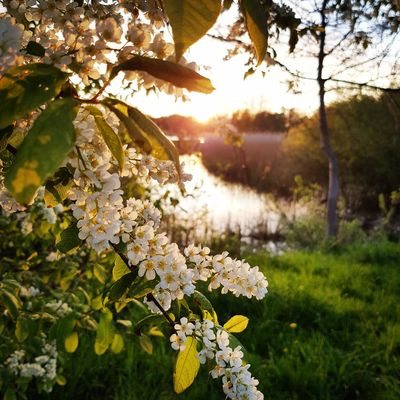 Nature Growth Beauty In Nature Flower No People Tranquility Plant Outdoors Freshness Tree Day Leaf Springtime Grass Fragility Branch Scenics Close-up Flower Head Sky