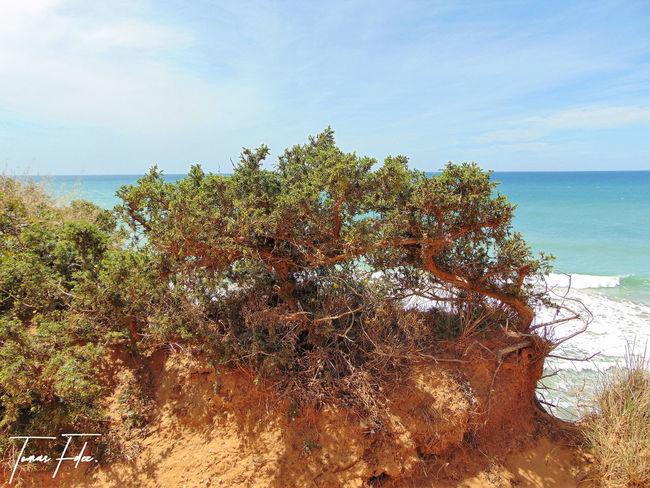Avesdeespaña Gaviotas  Paisajes Marinos Paisajes Naturales. Palomas Plantas Rocas Y Mar Vegetacion
