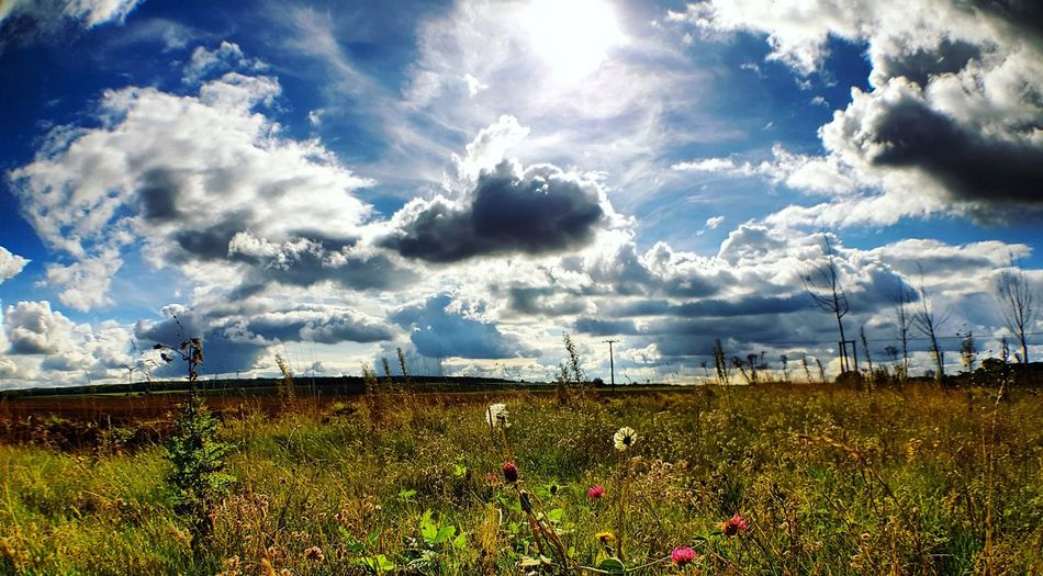 Nature Cloud - Sky Beauty In Nature Sky Scenics Tranquility Outdoors Tranquil Scene Landscape Rural Scene Freshness Agriculture Backgrounds hard to believe its October