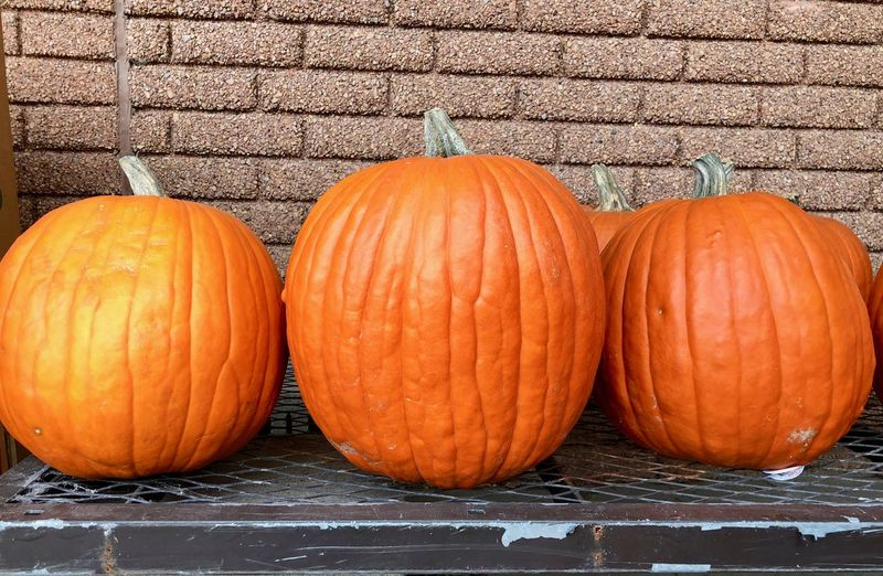 Close-up of pumpkins against orange wall