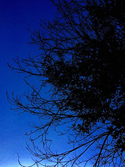 Sky Nature Backgrounds No People Tree Branch Low Angle View Nature Bare Tree Silhouette Clear Sky Beauty In Nature Growth Outdoors Blue Day Moon Bird