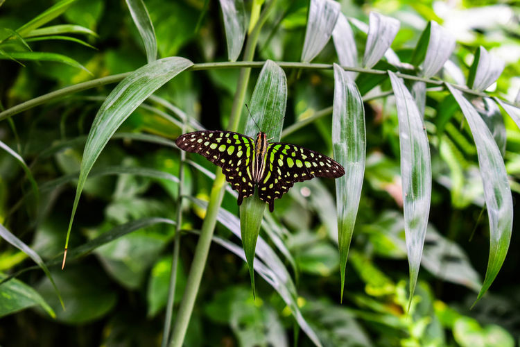 One Animal Animals In The Wild Animal Wildlife Insect Animal Themes No People Nature Close-up Focus On Foreground Spider Web Outdoors Plant Day Full Length
