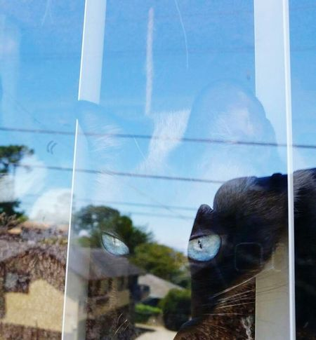 Nooni Cat Refelections Kitty Love Showcase July EyeEm Best Shots Window Reflections Cats Of EyeEm Showcase: July Hello World My Year My View