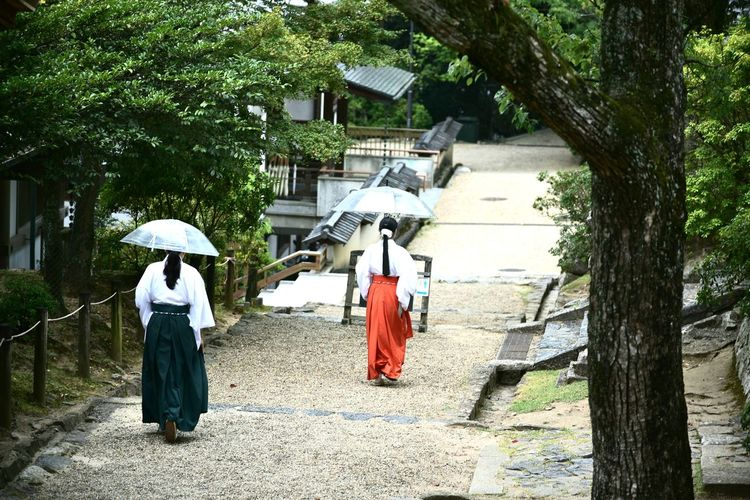 Rear view of women walking on footpath amidst trees
