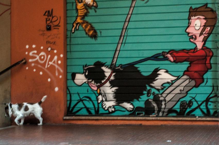 Virtual Reality Dog Dogslife No People Colour Your Horizn Street Art Street Photography Streetphotography Urban Urban Life