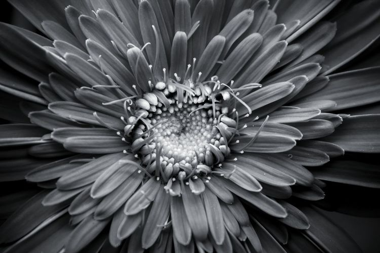 Nature Arboretum Ucdavis Spring California Black And White Canon UnderSea Passion Flower