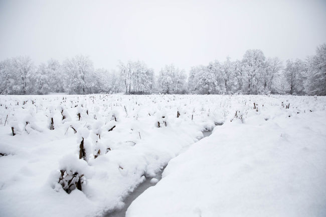 Cold Temperature Day Landscape No People Outdoors Snow Snowy Field Tranquil Scene White Color Winter