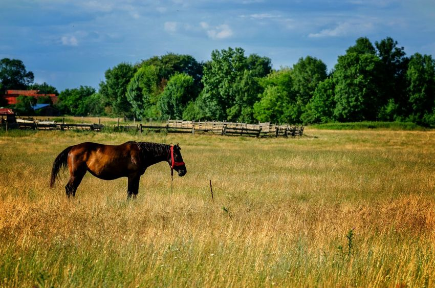 Horse Countryside Countryside Scene Country Life Landscape EyeEm Animal Lover Fieldscape Outdoors Farm Life Farm Animals