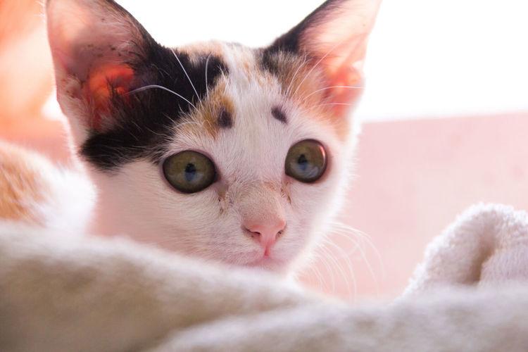 Cat Cat Lovers Cat Portrait Cat Watching Cat ♡ Pet Portraits Pets Domestic Animals Close-up Animal One Animal Meow