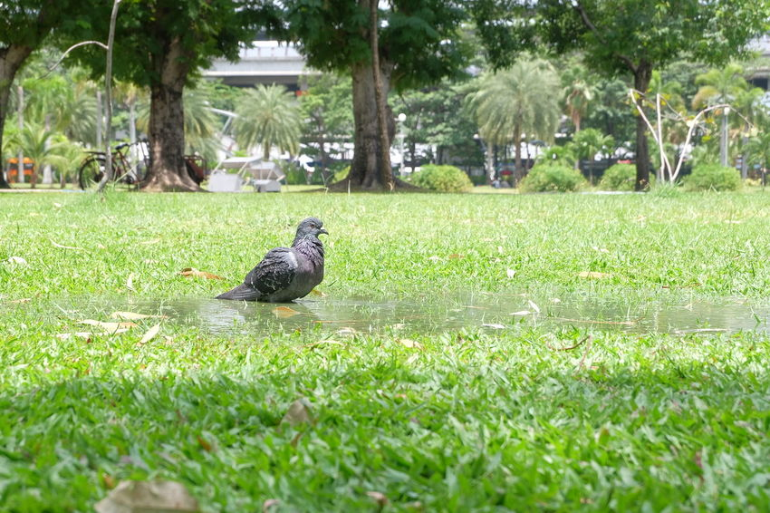 bird in garden Animal Bird Chatuchak Chatuchak Park City Close-up Day Garden Grass Green Greensward Nature Outdoor Park Plant Tree Water
