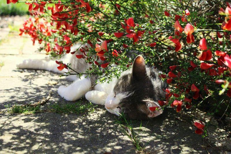 Cat Cats Animals Pets Cute Cute Pets Asleep Sleeping Meow Flowers