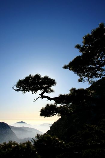 Silhouette tree against clear blue sky