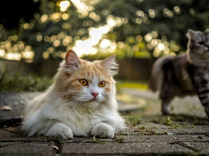 Close-up of cat looking away while sitting on footpath