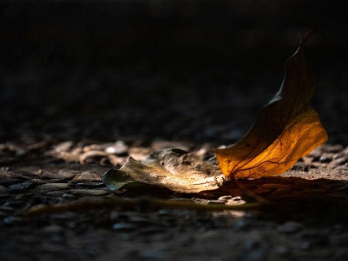 Close-up of dry leaf on wood