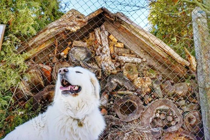 Animal Themes One Animal Pets Domestic Animals Mammal Cage No People Outdoors Day Nature Dog Tree Close-up Polar Bear Love♥ Free Freedom Watching Looking At Camera Relaxation Multi Colored