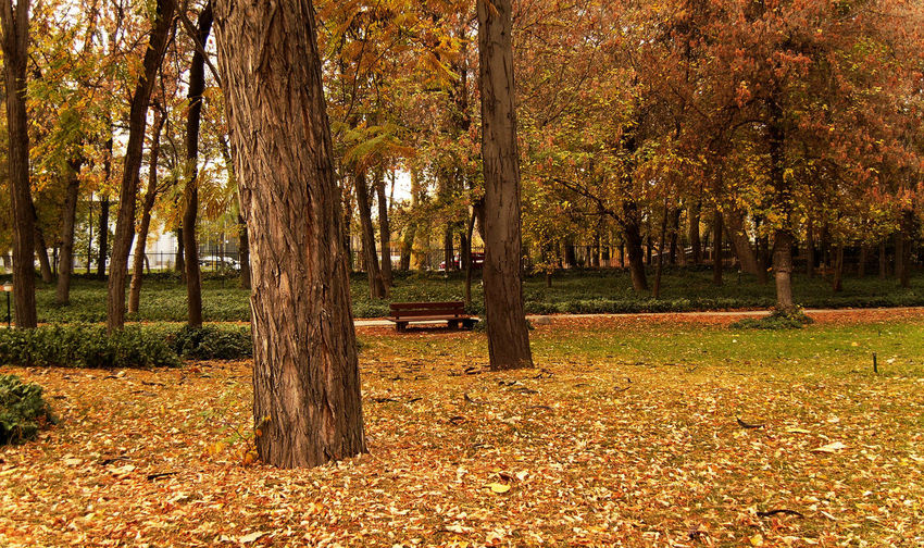Trees Autumn Park Colors Of Autumn Piece of beauty in a loud city.