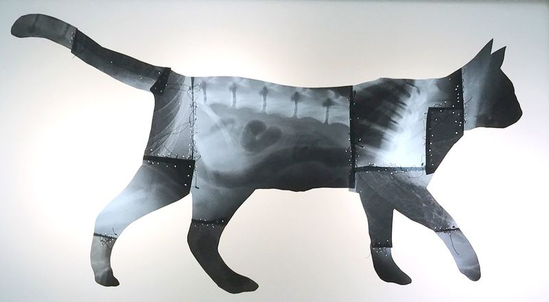 Cat sell art art collection swiss love